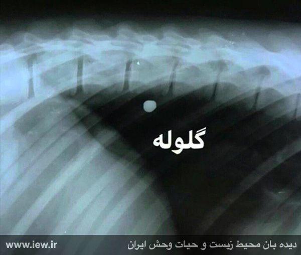 980607_aliabad-4