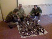 103 قطعه پرنده کوکر از متخلفان شکار در گمیشان کشف شد