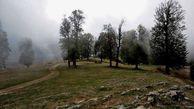 حدود ۳۰ هزار هکتار جنگل کم بازده در گلستان نیازمند بازسازی است