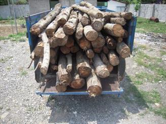 متخلفین در حین قطع درختان پارک جنگلی قرق دستگیر شدند