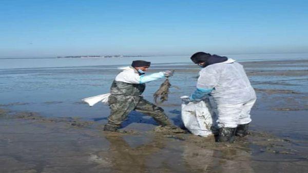 آمار تلفات پرندگان در خلیج گرگان و میانکاله از مرز ۱۶ هزار قطعه گذشت