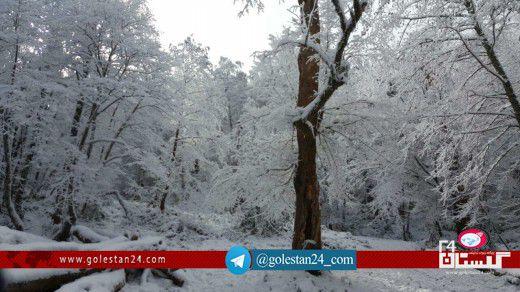 جنگل برفی گلستان (11)