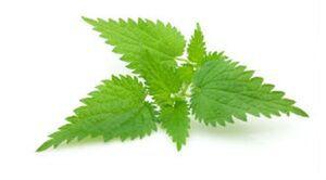 از مصرف این گیاه دارویی غافل نشوید