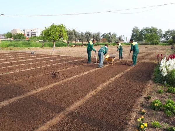 تولید بیش از دومیلیون نشا فصلی تابستانه در گرگان