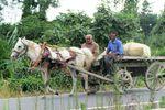 نقش اسب و ارابه در اقتصاد معیشتی روستاهای شهرستان کردکوی+تصاویر