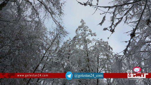 جنگل برفی گلستان (2)