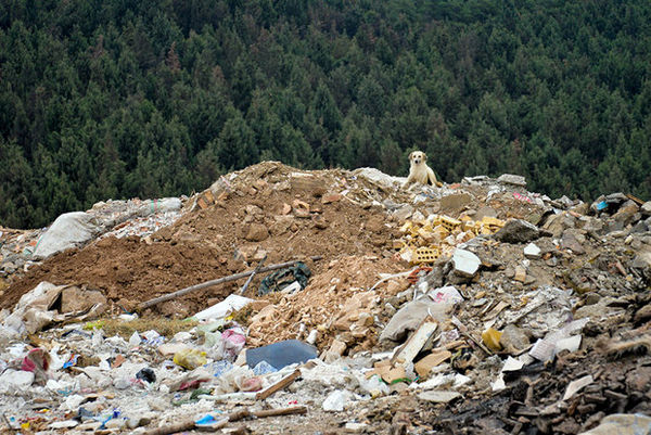 تخلیه فاضلاب و زباله در تپه «سوگله»/ دفن درختان میان زبالهها