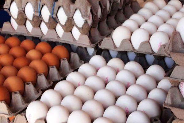 برخورد تعزیرات با گرانفروشان تخم مرغ در گلستان