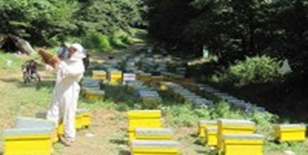 17 هزار کندو زنبور عسل در 130 نقطه از جنگلهای نمدار گالیکش ساماندهی شد
