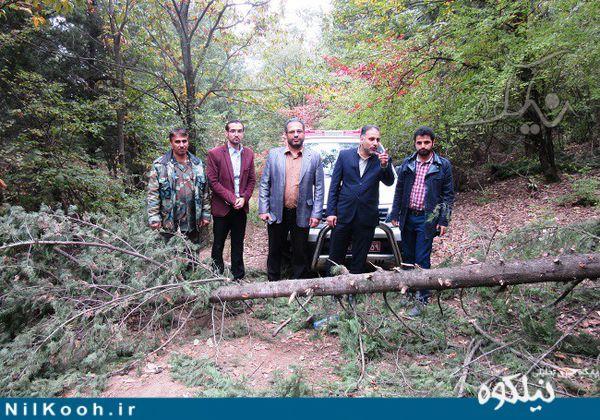 قاچاقچیان 23 اصله درخت در کاجستان گالیکش دستگیر شدند + تصاویر