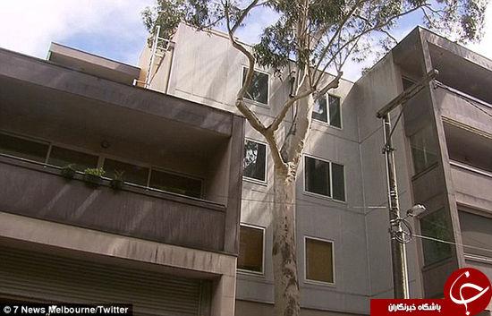 سقوط زوج جوان از بالای ساختمان 10 متری +تصاویر
