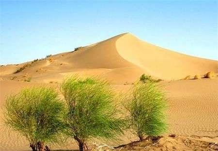 حدود 300 هزار هکتار از اراضی ورزی استان تبدیل به دشت رسوبی شور است
