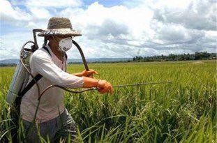 احتمال بروز بیماریهای برگی در مزارع گلستان به دلیل ناپایدار بودن هوای استان