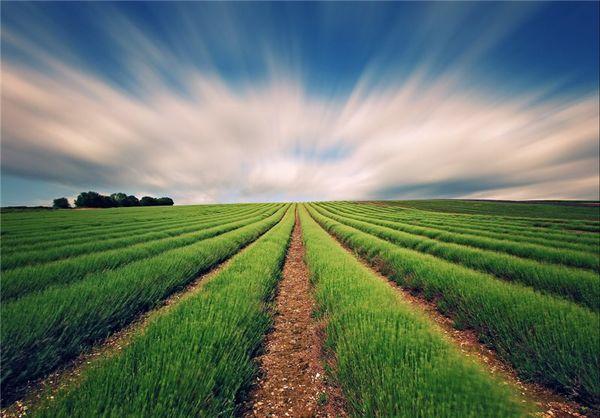 هشدارهای هواشناسی به کشاورزان تا ۱۴ مهر/ مراقب باد و باران باشید