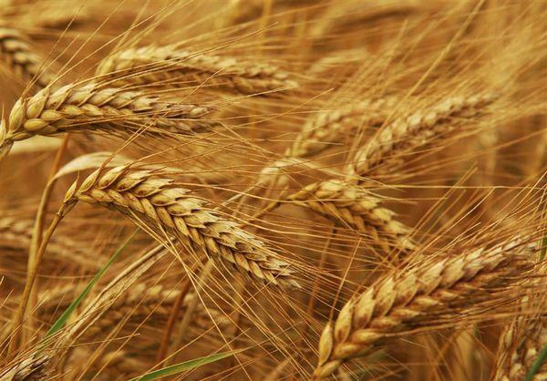 بیش از ۴۷ هزار تن بذر تامین می شود