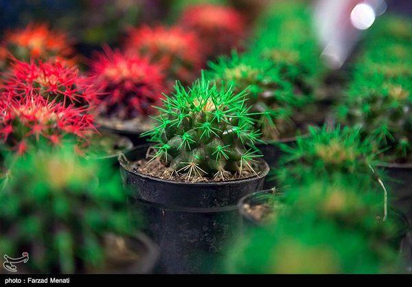 هشتمین نمایشگاه گل و گیاه استان گلستان افتتاح شد