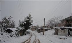 فیلم/ بهار زمستانی در تبریز!