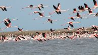 عکس | منظرهای زیبا از پرندگان مهاجر در گلستان