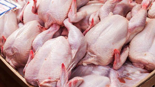 تولید حدود ۲۷۹ هزار تن مرغ/ رتبه دوم گلستان در تولید