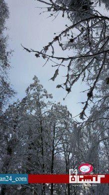 جنگل برفی گلستان (10)
