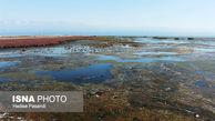 لایروبی، خلیج گرگان را احیا نمیکند