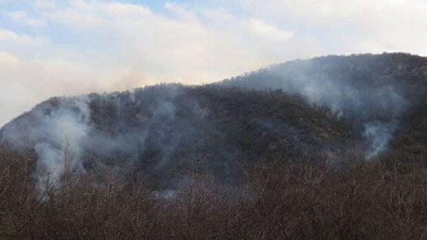 افزایش دما خطری برای حریق احتمالی جنگل های گلستان