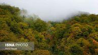 ایجاد دفتر پایگاه جهانی حفظ جنگلهای هیرکانی در پارک ملی گلستان