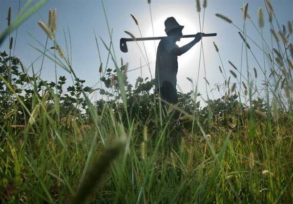 هشدار فائو درباره تأثیر تغییرات اقلیمی بر امنیت غذایی