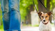 سگ گردانی در گرگان ممنوع است