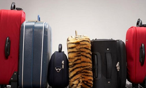 افزایش صادرات چمدانی از استان