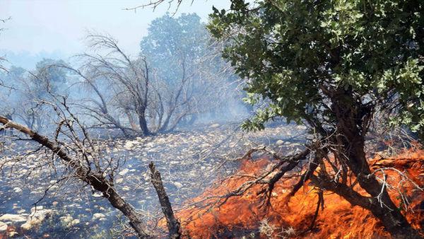 زخمی شدن ۲ جنگلبان حین دفاع از طبیعت/ عمدی بودن آتش محرز نشده است