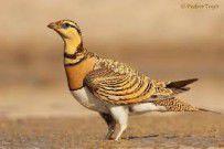 رهاسازی ۳۵ پرنده از گونه کوکر در سواحل دریای خزر