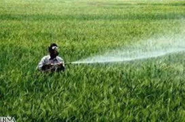 کشاورزان گنبدی مزارع غلات را علیه قارچ ها سمپاشی کنند