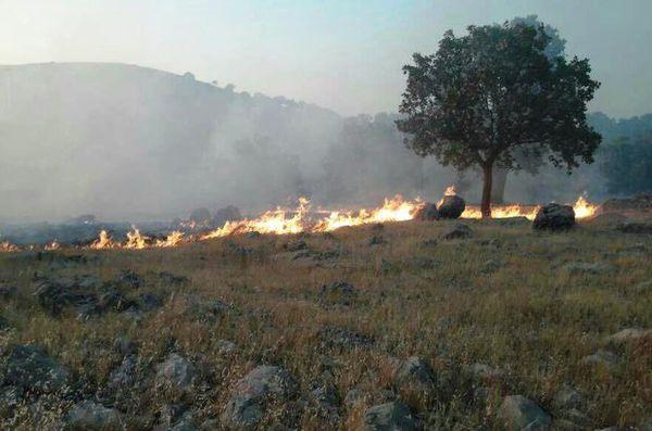 آتش سوزی در ارتفاعات جنگلی رادکان کردکوی