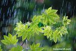 بارش باران در استان گلستان