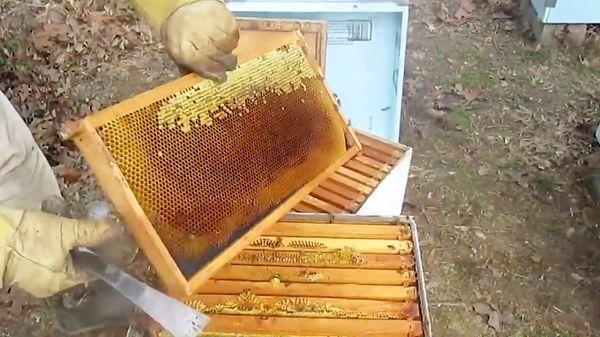 برداشت عسل بهاره در گلستان آغاز شد