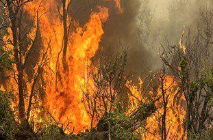 حضور نیروهای امدادی منابع طبیعی در منطقه آتشسوزی جنگلی کلاله