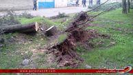 توضیح رییس منابع طبیعی گرگان در مورد قطع برخی از درختان روستای قرن آباد