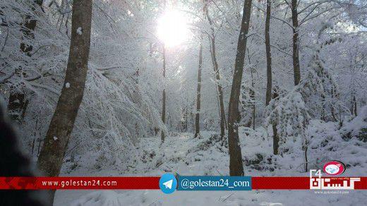 جنگل برفی گلستان (9)
