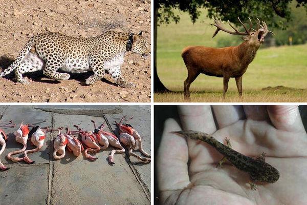 جفا به تنوع زیستی گلستان/ محیط زیست مورد غفلت قرار گرفت