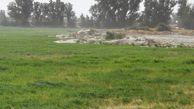 خسارت خشکسالی پاییزه به ۱۰۰ هزار هکتار از اراضی کشاورزی گلستان