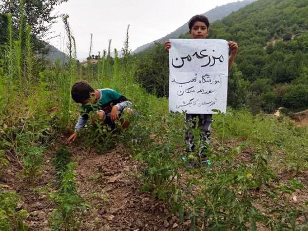 """اجرای طرح""""مزرعه تابستانی من"""" توسط دانش آموزان روستای فرنگ در گلستان"""