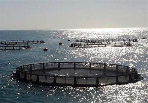 طرح پرورش ماهی در قفس در سواحل دریای خزر استان گلستان اجرا میشود