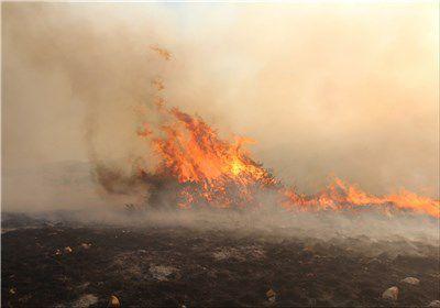 ۵۰ هکتار دیگر از گندمزارهای شهرستان کلاله در آتش سوخت