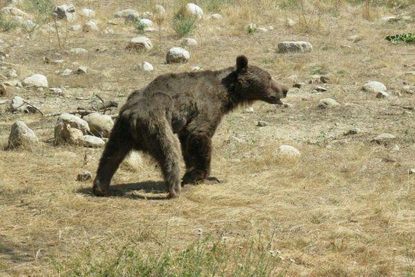 اطلاعی از ضرب و شتم توله خرس پارک ملی گلستان نداشتیم
