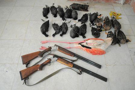 ۵۱پرنده از شکارچیان زنده گیر و غیرمجاز در گلستان کشف شد