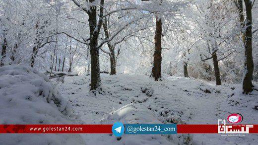 جنگل برفی گلستان (12)