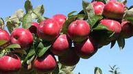 وقتی عدم مدیریت باعث می شود سیب درختی به سیب زمینی تبدیل شود