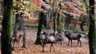 موردی از ابتلای حیات وحش این پارک به بیماری طاعون مشاهده نشده است