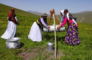 تولید حدود ۵ هزار تن شیر و کشک در گلستان
